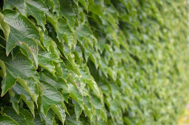 בניית קירות ירוקים: פתרון אקולוגי, ירוק וידידותי לסביבה